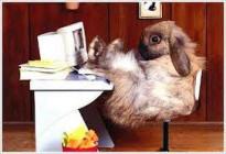 Poviedky na počkanie XLVII - Bunny PNP